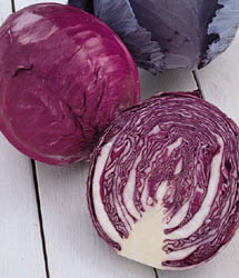 Salad Delight Cabbage