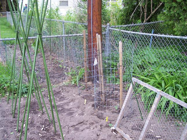 Tomato Cages - May 25