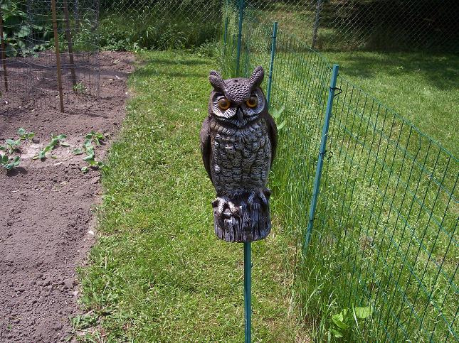 Guard Owl - Planting Day